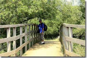 Puente en Richmond Park en Londres